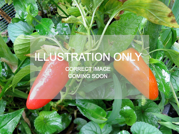 Sample chilli plant image